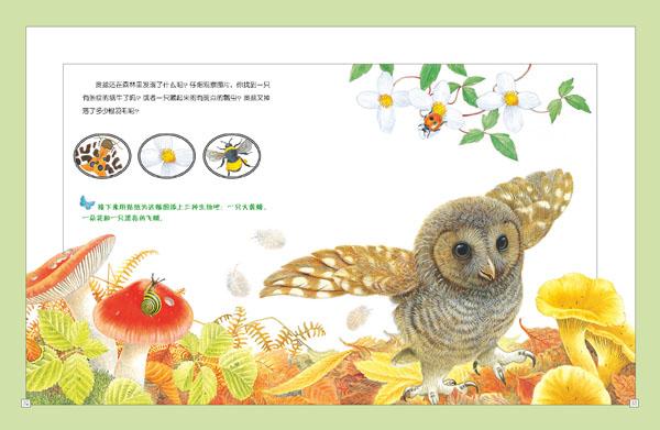 妙趣自然贴纸(全5册)动物科普百科贴纸 昆虫世界 河流与海岸 森林雨