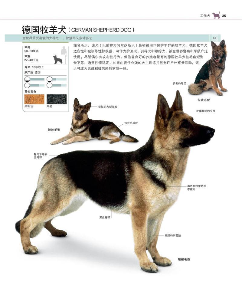 宠物狗知识_宠物喂养知识_宠物知识