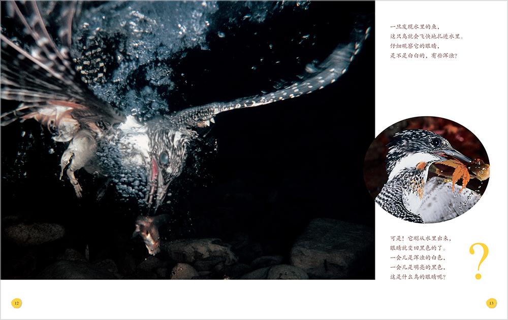 动物的眼睛-百道网