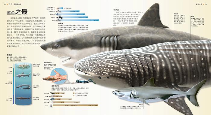 鱼的内脏结构示意图