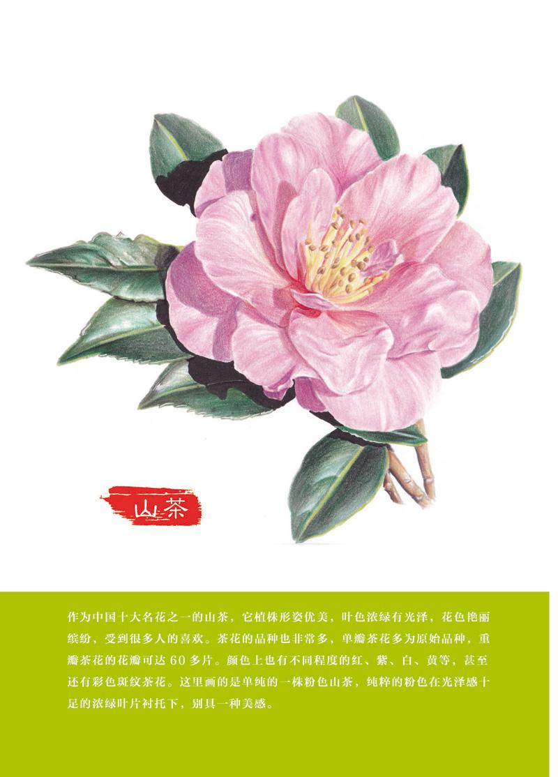 正版r7_彩铅花绘开:超细腻的彩铅花卉绘制宝典 9787121314629 电子